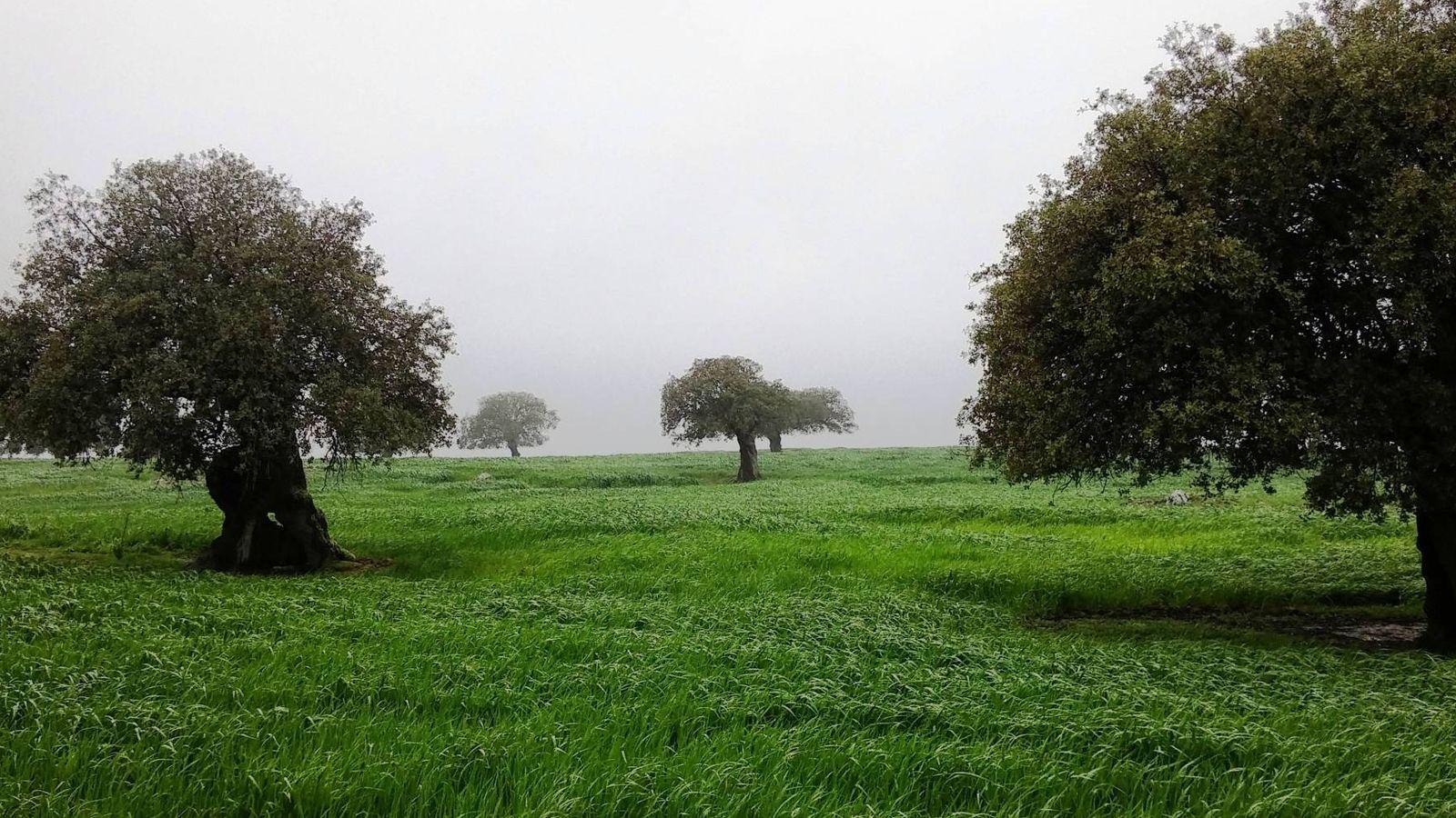 Foto: La dehesa es un ecosistema creado por el hombre. (Foto: cedida por Agedrex)