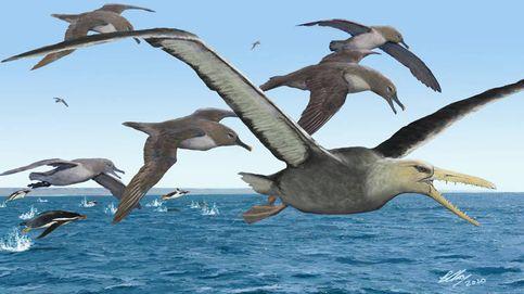 Así eran las aves prehistóricas depredadoras más grandes de la historia
