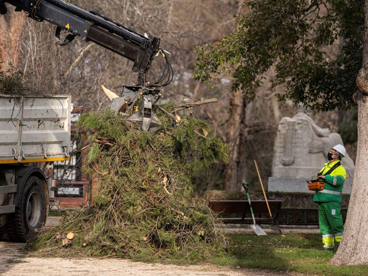 Foto: Operarios llevan a cabo trabajos de restauración y mantenimiento en el Parque del Retiro de Madrid. (EFE)