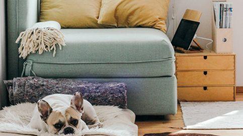 Cinco ideas de decoración y diseño para una casa con mascotas
