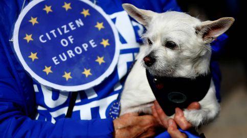 Perros contra el Brexit