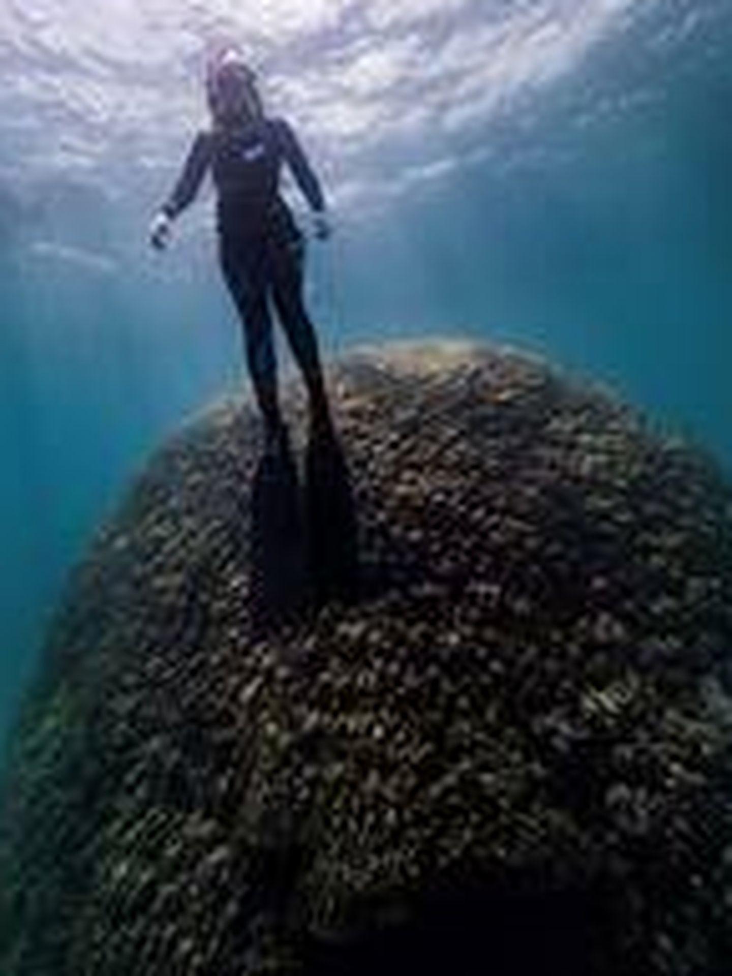 Submarinistas hallan un enorme coral de 400 años en Gran Barrera australiana. (EFE)
