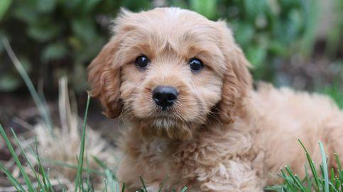 Tres estudios que han cambiado todo lo que creíamos sobre los perros
