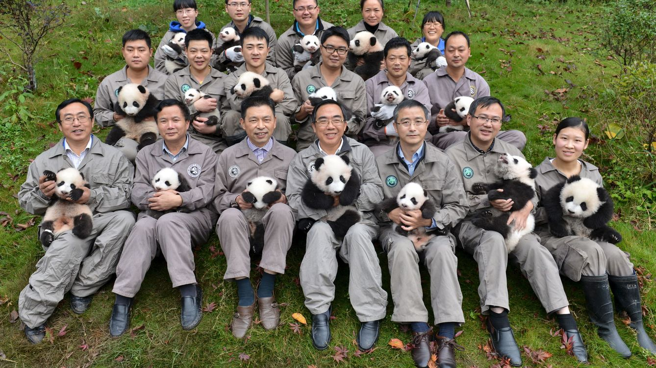 Image result for ositos panda china  Centro de Conservación de Osos Panda