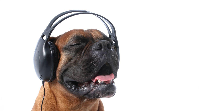 ¿Cuál es el tipo de música que gusta más a los perros?