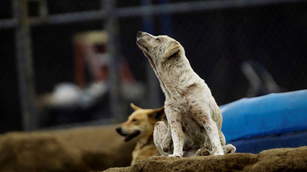 Foto: Perros callejeros.