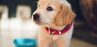 Post de Los mejores piensos para perro que puedes comprar en el supermercado, según la OCU