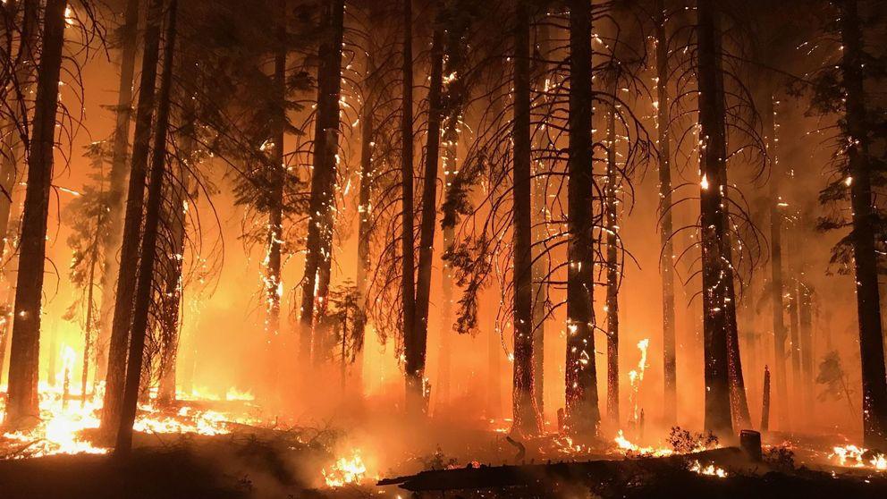 La mayor eléctrica de California firma la bancarrota por las demandas de Camp Fire