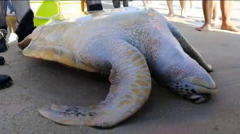 Rescatan a una tortuga marina varada en una playa de China
