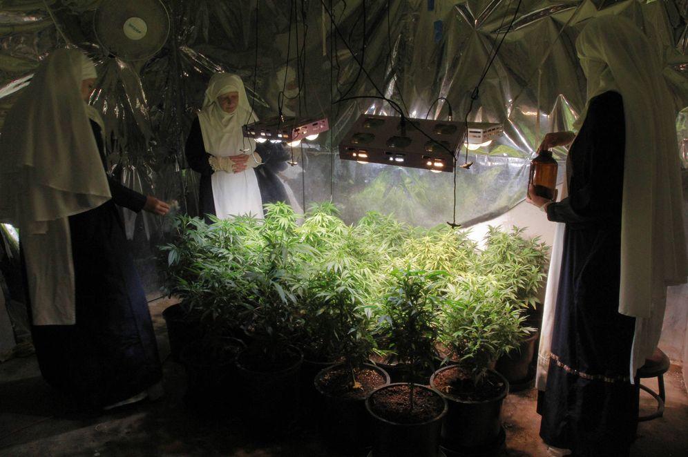 Foto: Las hermanas Kate, Evee y Kassidy supervisan una plantación de interior (E. Catalán)