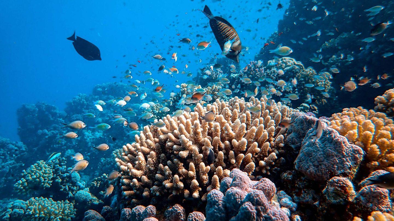 La conservación de la biodiversidad marina australiana pasa por conservar la Gran Barrera de Coral. Unsplash