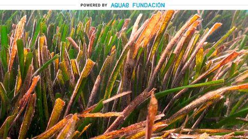 Alga parece, posidonia es: esta es la planta que se te pega en el agua