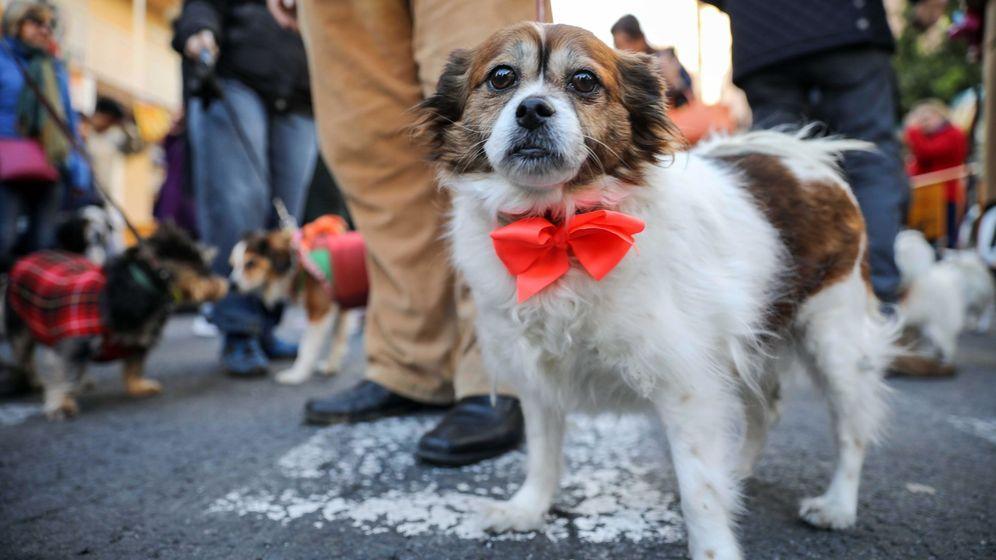 Foto: Los perros nos entienden mejor de lo que crees.Foto: EFE Ana Escobar