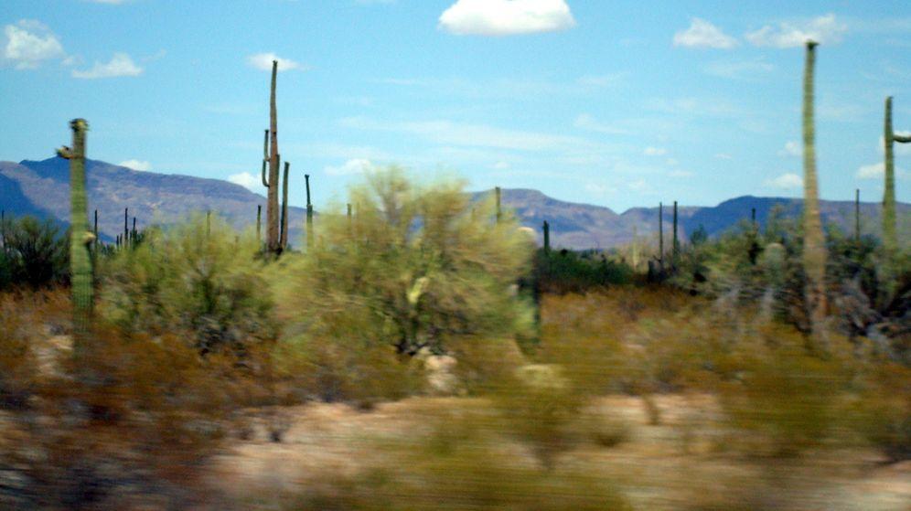 Foto: El desierto de Sonora es una de las rutas que utilizan las mafias para introducir inmigrantes en Estados Unidos (Flickr/dchrisoh)
