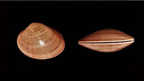 Los neandertales buceaban y utilizaban conchas de almejas como herramientas