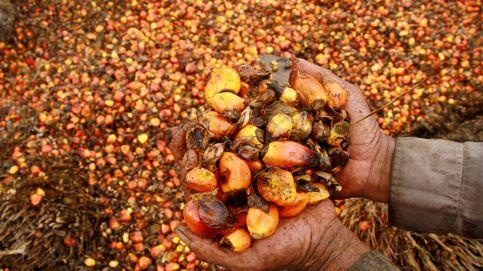 De planta ornamental a 'campeón' alimentario: cómo el aceite de palma conquistó el mundo