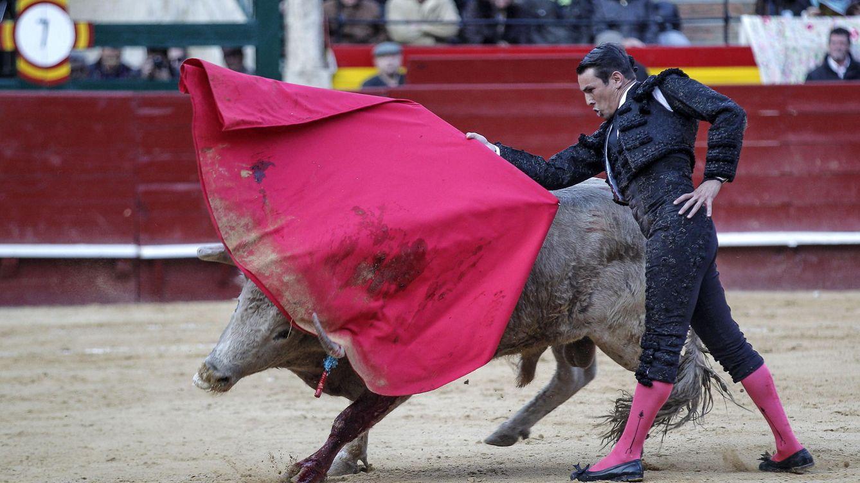 Foto: José María Manzanares torea uno de los toros de la ganadería de Juan Pedro Domecq durante la Feria de Fallas. (EFE)