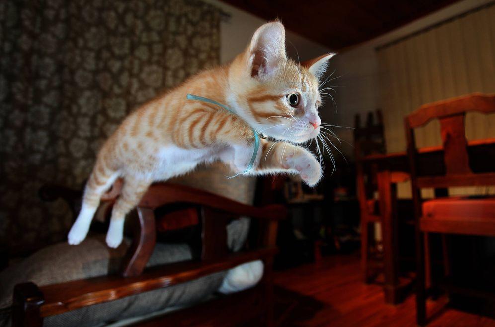 Foto: Desde muy pequeños ya demuestran esta habilidad. (iStock)