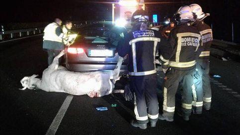 Un muerto y un herido grave tras colisionar su coche con una vaca en Cantabria