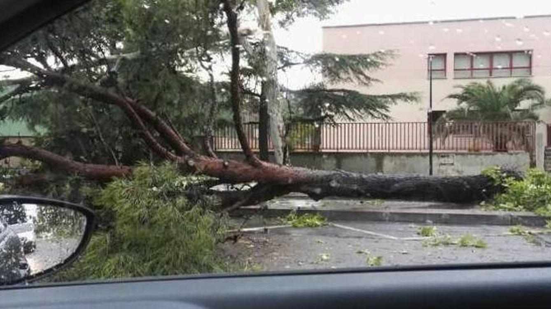Una fuerte tormenta derriba casi 40 árboles y obliga a cortar varias calles en Zaragoza