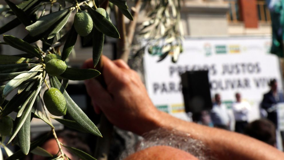 Las exportaciones de aceite de oliva a EEUU caen más del 60% por los aranceles