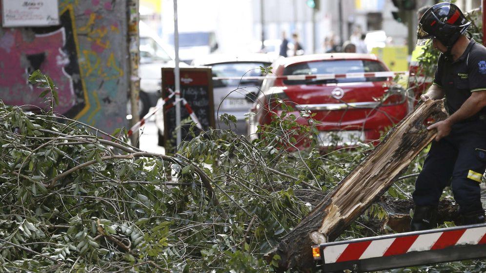 Foto: Un bombero retira las ramas de un árbol caído en Madrid. (EFE)