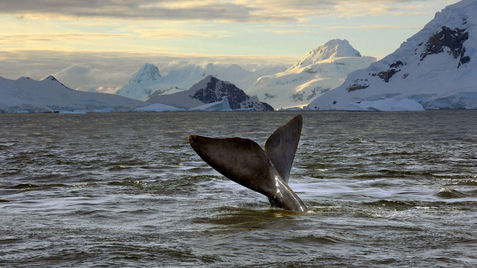 Foto: Una ballena avistada en el mar de Ross
