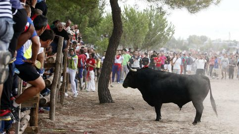 El Constitucional avala por unanimidad la prohibición de matar al Toro de la Vega