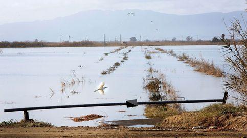 Por qué Gloria golpea pero no arrasa la cosecha de arroz del delta del Ebro