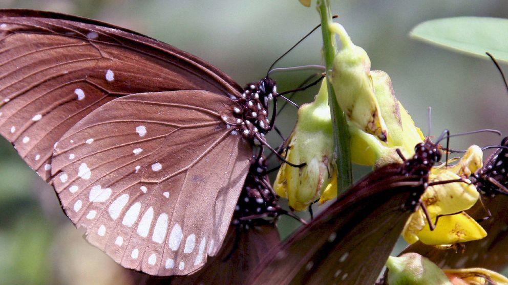 El aleteo de una mariposa o cómo perder el tren puede cambiar nuestra vida