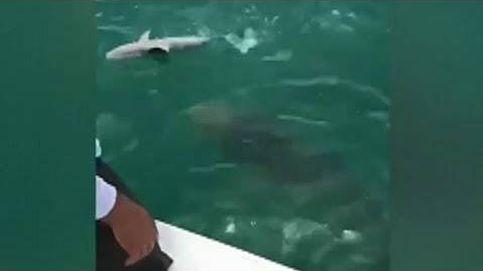 Intentan pescar un tiburón pero un mero gigante se les adelanta