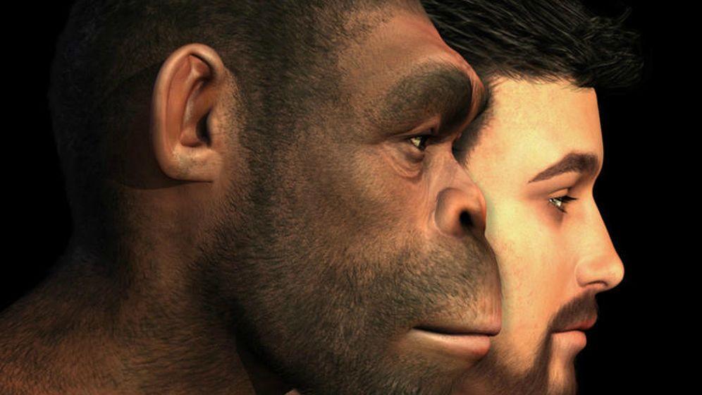 Foto: Proponen un nuevo modelo de evolución humana en cuatro fases