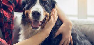 Post de ¿Cómo ven el mundo los perros? Claves para poder entenderlos mejor