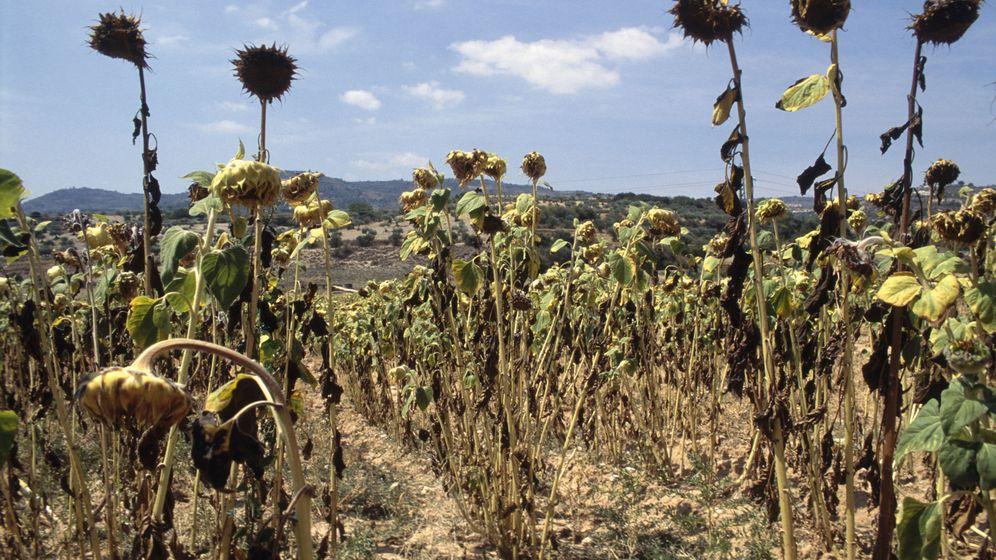 Foto: La sequía de los campos españoles es uno de los efectos del cambio climático. (Corbis)