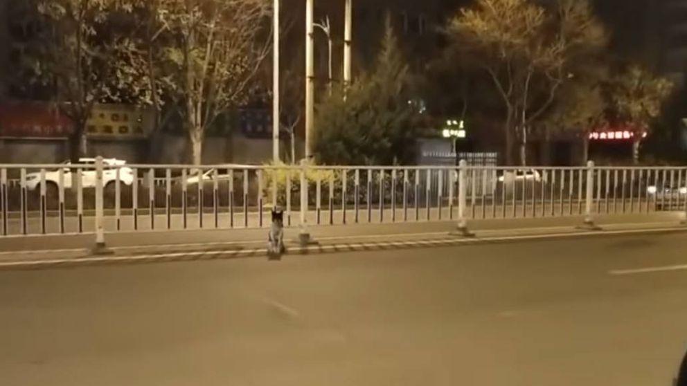 El perro más leal del mundo está en China y lleva 80 días esperando a su dueña