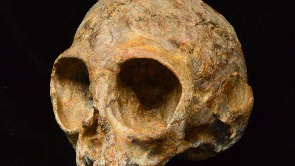 Este pequeño cráneo resuelve un enigma de cuatro millones de años
