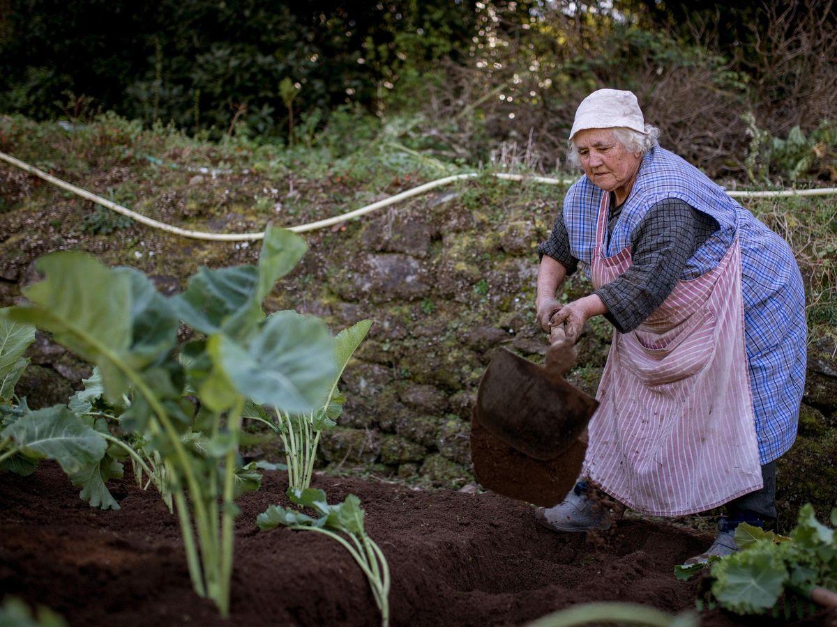 Foto: Una mujer trabaja su huerta en Ourense. (EFE)