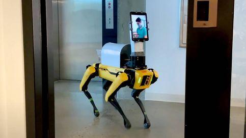Crean un perro robot para tratar pacientes con covid-19
