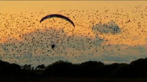 Volando entre estorninos