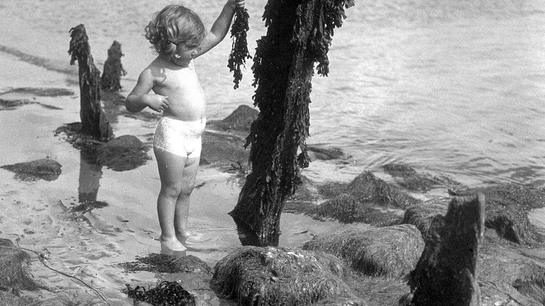 Por qué se llama el alga de la juventud y qué puede hacer por tu piel el activo kalpariane