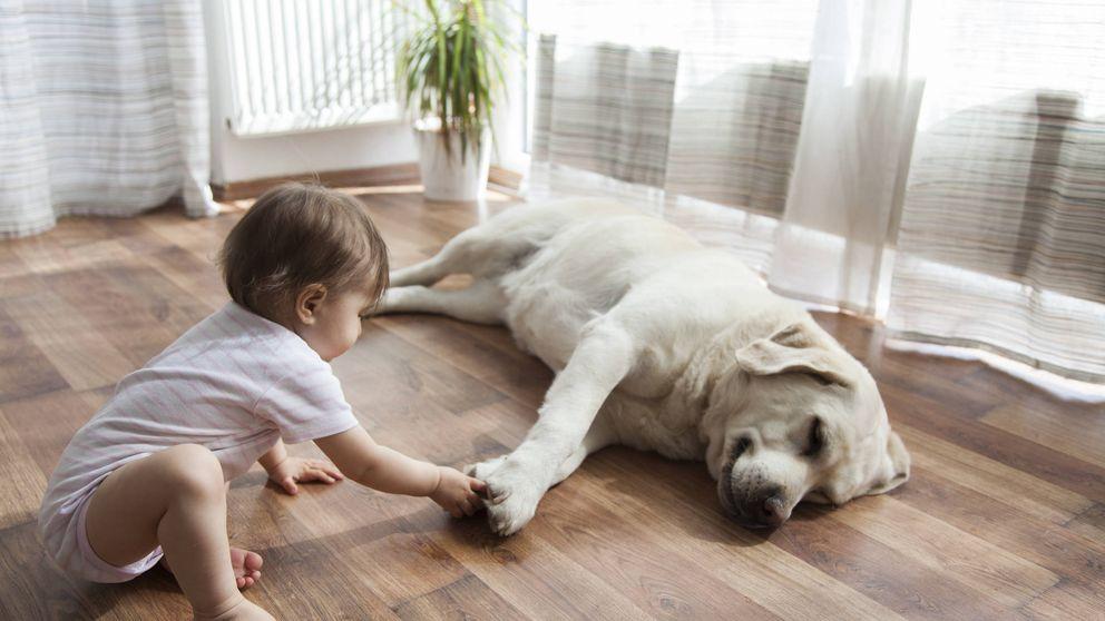 Tener un perro podría reducir el riesgo de padecer esquizofrenia