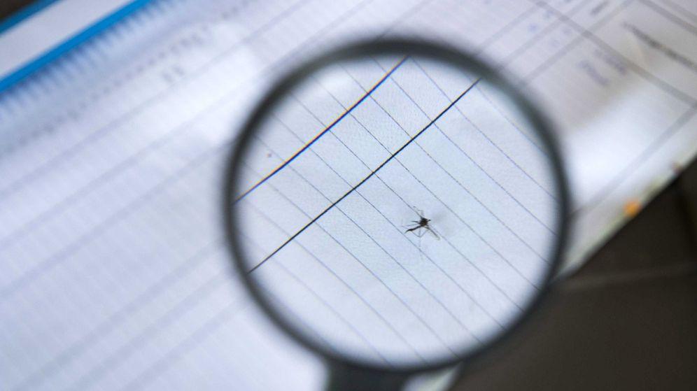 Foto: Búsqueda de mosquitos tigre en Aalten, Países Bajos. (Reuters)