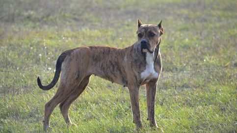 La verdadera historia del perro que será sacrificado por morder a un  rumano