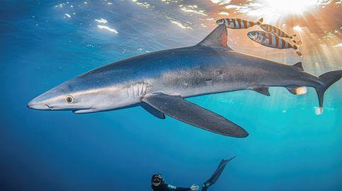 Los tiburones están desapareciendo de la Costa Brava