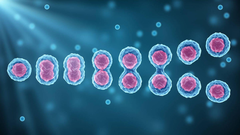 División de células madre. (iStock)