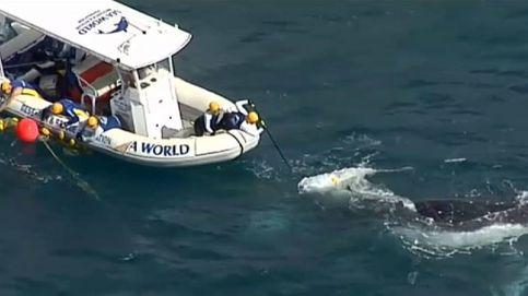 El complicado rescate de una ballena en la costa de Australia