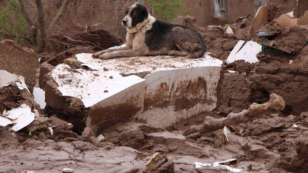 Foto: Muchos perros son obligados a vivir en condiciones deplorables