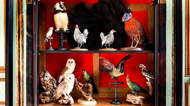 Foto: Los más variados tipos de aves en una de las alacenas de la tienda.