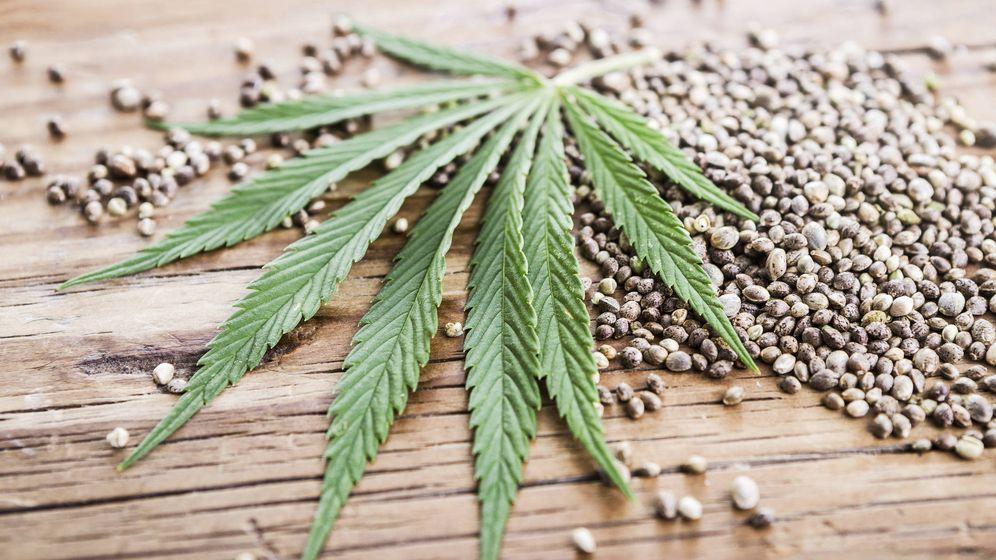 Foto: Semillas de cáñamo, de la planta cannabis. (iStock)