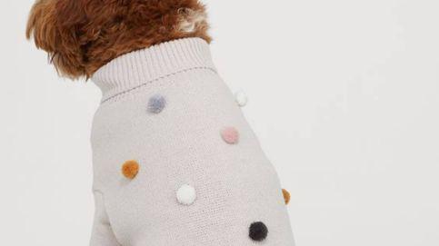 H&M quiere que tu perro vaya a la moda con esta colección de prendas sostenibles
